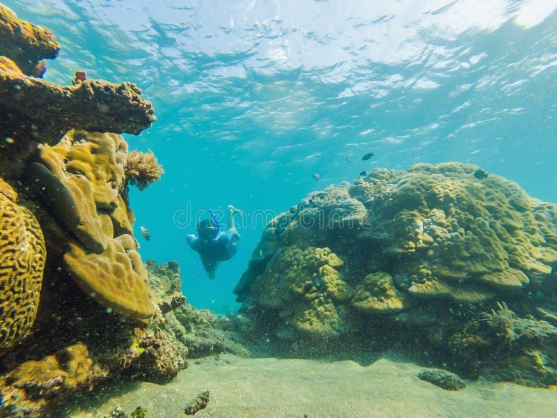 Homem feliz em mergulhar o mergulho da máscara subaquático com os peixes tropicais na associação do mar do recife de corais Estil foto de stock