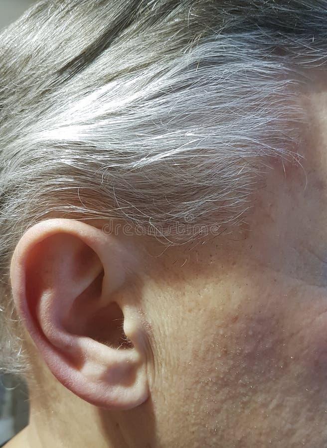 Homem grisalho, orelha, envelhecendo fotografia de stock royalty free