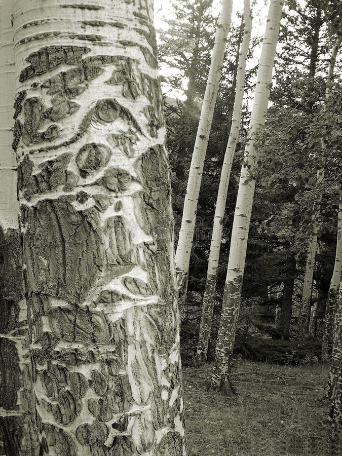 Homem Idoso Da Floresta Imagem de Stock