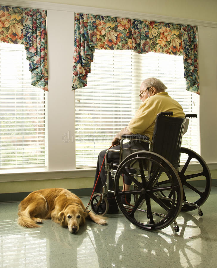 Homem idoso na cadeira de rodas e no cão fotos de stock