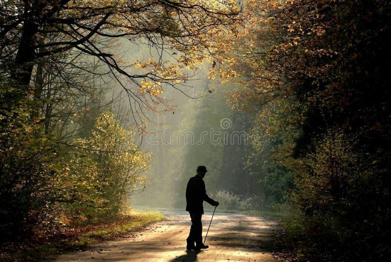homem idoso na floresta do outono no nascer do sol imagem de stock
