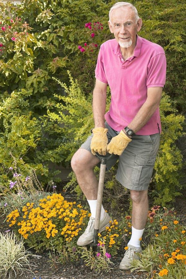 Homem idoso que escava no jardim imagem de stock