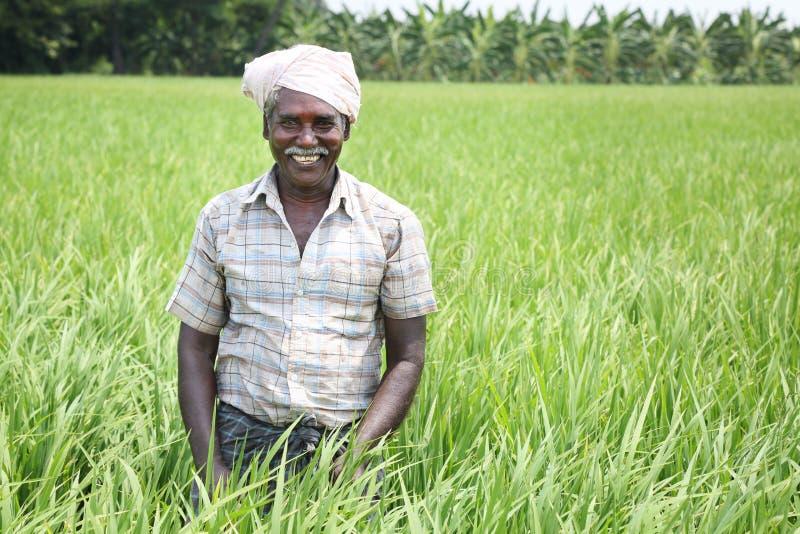 Homem indiano que guarda a foice e as colheitas imagem de stock royalty free