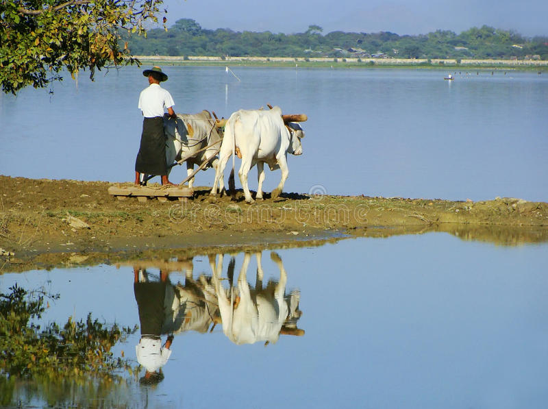 Homem local que trabalha em um campo de exploração agrícola perto do lago, Amarapura, Myanmar foto de stock royalty free