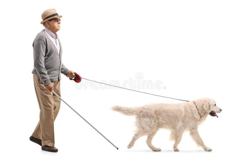 Homem maduro cego que anda com a ajuda de um cão imagem de stock royalty free