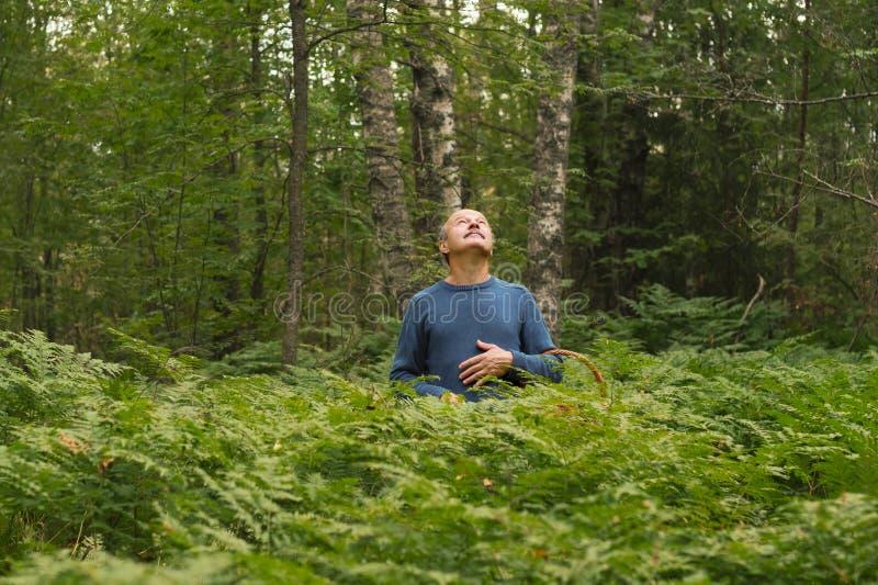 Homem maduro que olha acima de tentativa ver o sol para navegar na floresta fotos de stock