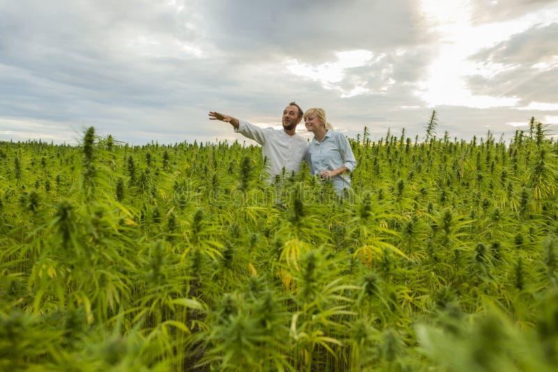 Homem mostrando fazenda de cânhamo em CBD a uma mulher foto de stock