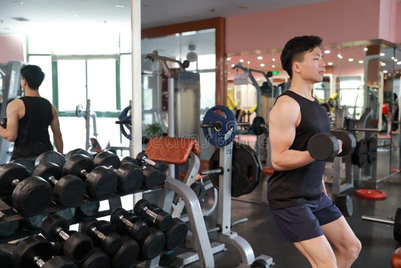 Homem muscular que dá certo no gym que faz exercícios com pesos nos bíceps, Abs despido masculino forte do torso fotos de stock