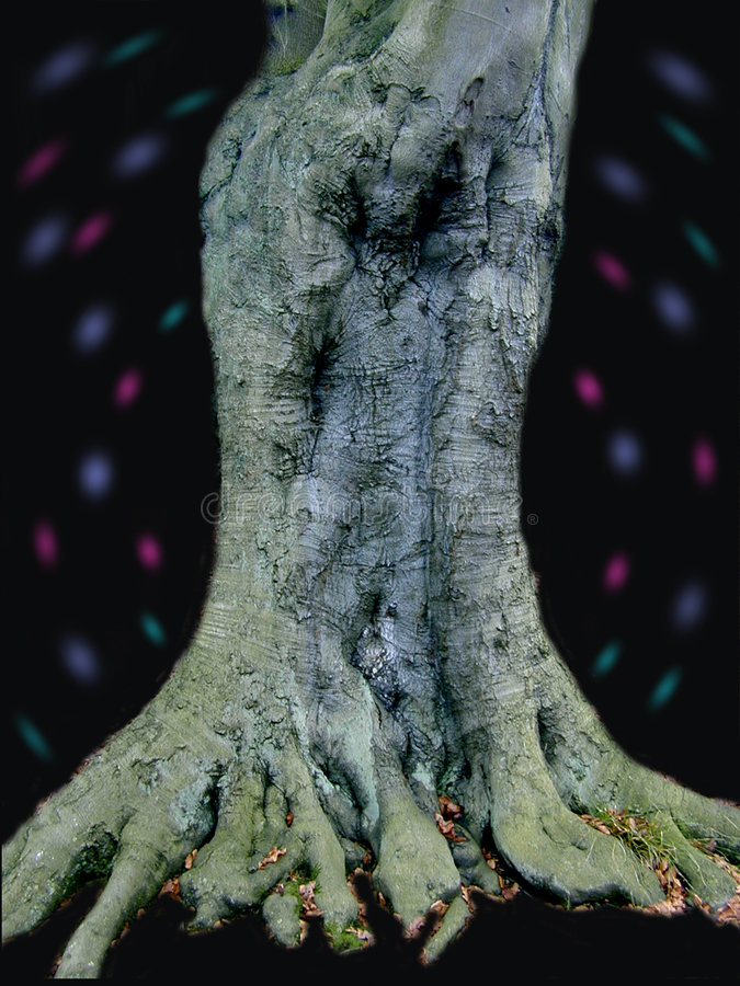 Homem Na árvore Imagens de Stock Royalty Free