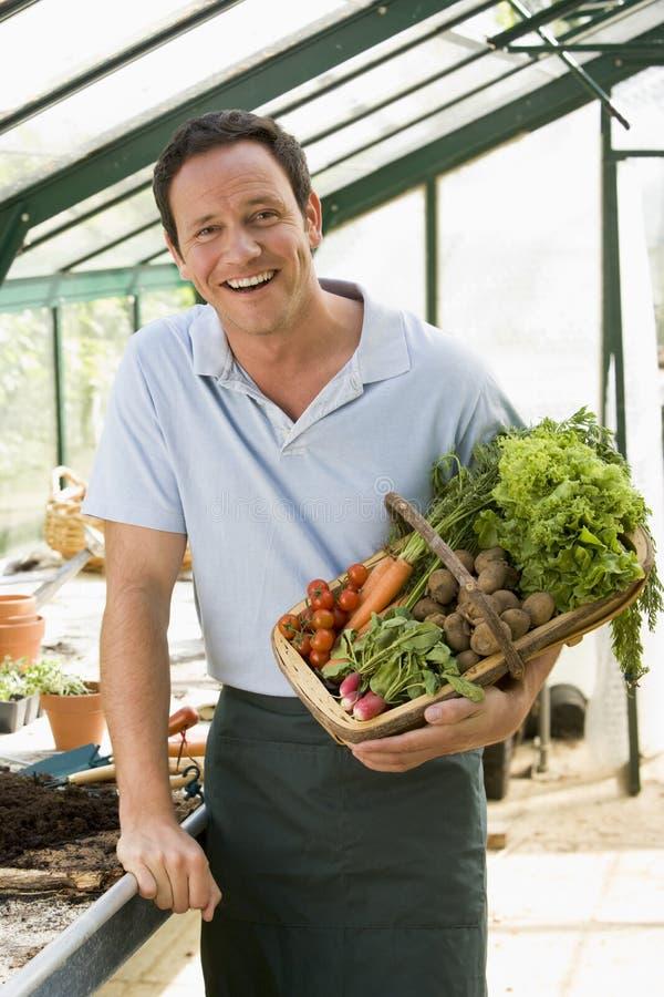 Homem na cesta da terra arrendada da estufa dos vegetais imagens de stock royalty free