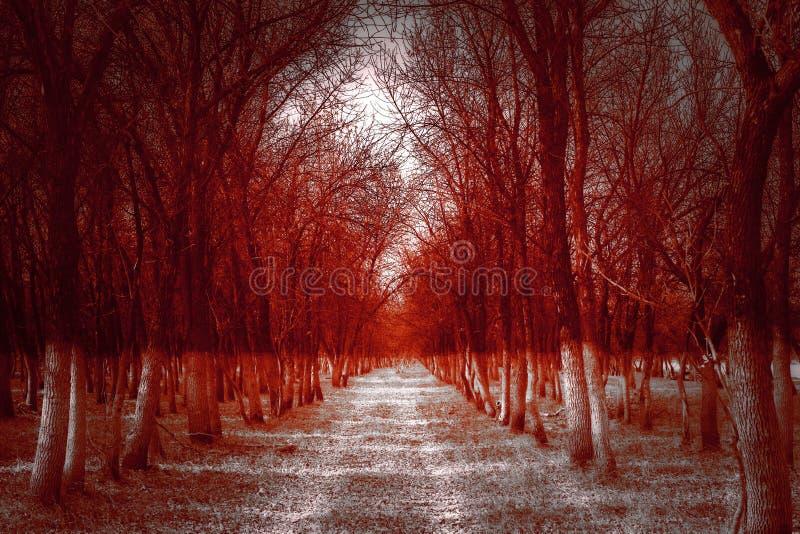 Homem na floresta assustador, paisagem escura do horror imagens de stock