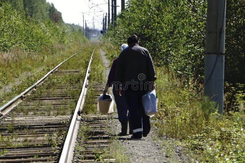 Homem na floresta, recolhendo para uma escolha dos cogumelos imagem de stock