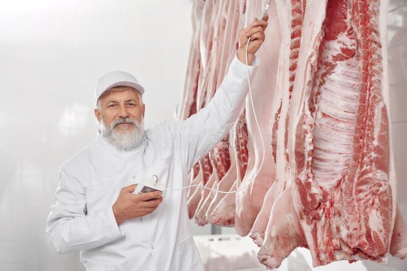 Homem na posi??o uniforme perto da fileira de carca?as de carne de porco, testando imagem de stock
