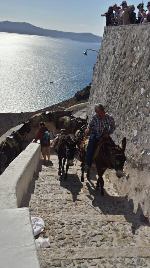 Homem no asno em Grécia fotografia de stock
