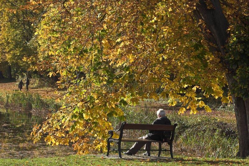 Homem no banco no outono em Dinamarca imagens de stock royalty free