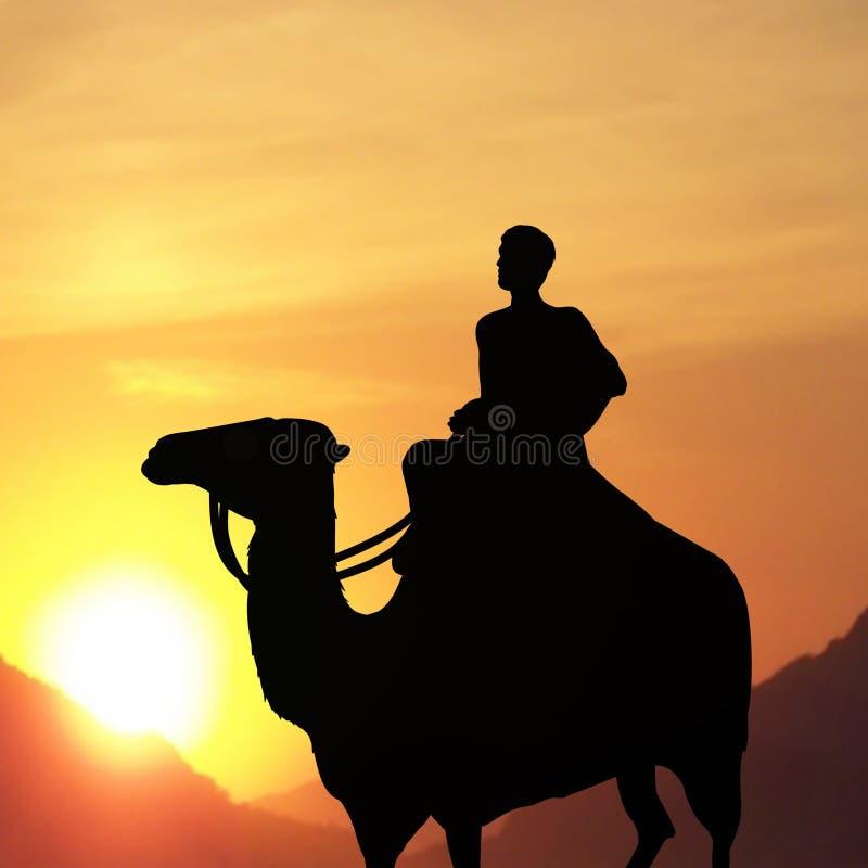 Homem no camelo fotos de stock royalty free