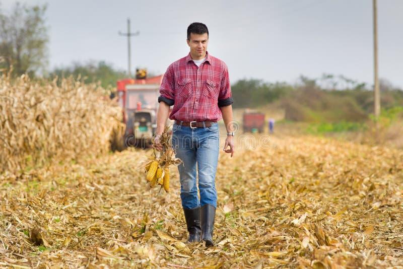 Homem no campo de milho fotos de stock royalty free