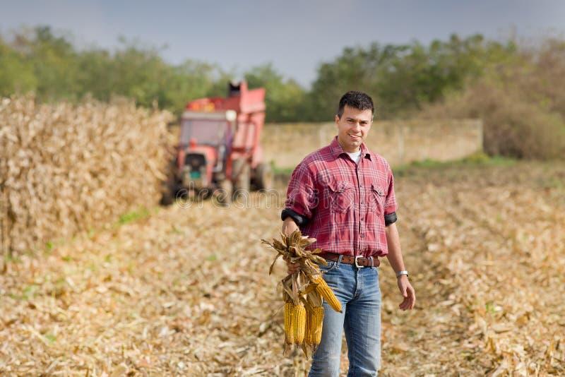 Homem no campo de milho imagem de stock