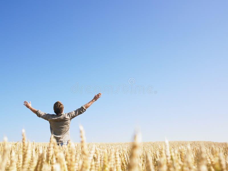 Homem no campo de trigo com os braços Outstretched fotos de stock