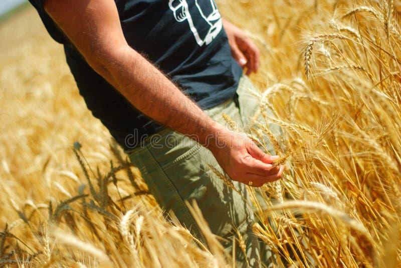 Download Homem no corn-field imagem de stock. Imagem de outdoor - 10055521
