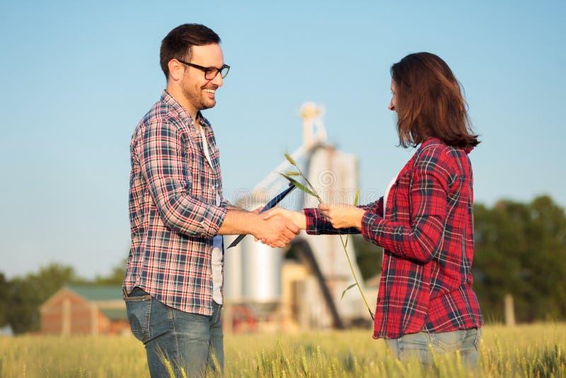 Homem novo feliz de sorriso e fazendeiros ou agrônomos fêmeas que agitam as mãos em um campo de trigo Inspecionando colheitas ant imagens de stock royalty free
