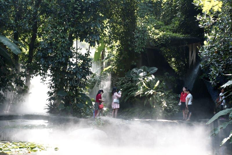 Homem novo na floresta úmida tropical foto de stock royalty free