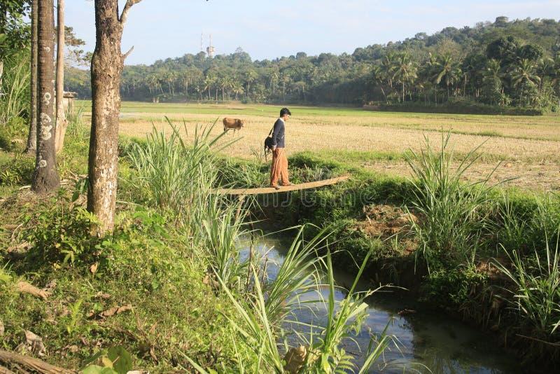 Homem novo que cruza um rio imagens de stock royalty free