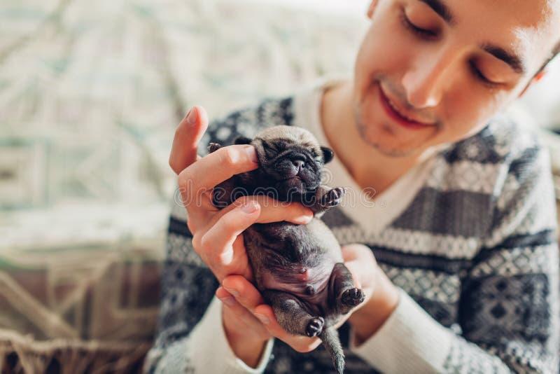 Homem novo que guarda o cachorrinho do cão do pug nas mãos Pouco sono dos cachorrinhos Produzindo cães foto de stock