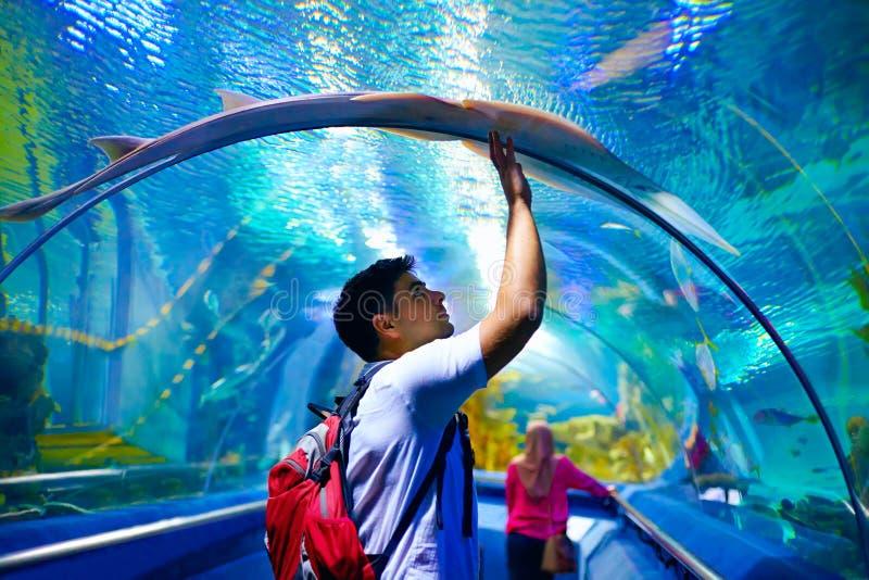 Homem novo, turista que toca no vidro sob grampo-peixes, ao visitar o túnel subaquático marinho imagens de stock