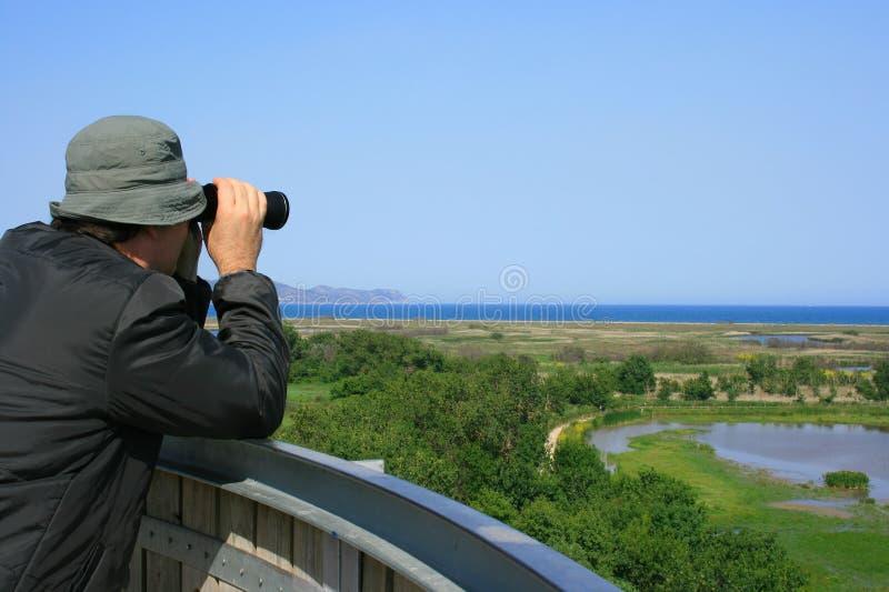 Homem observando animais selvagens imagens de stock