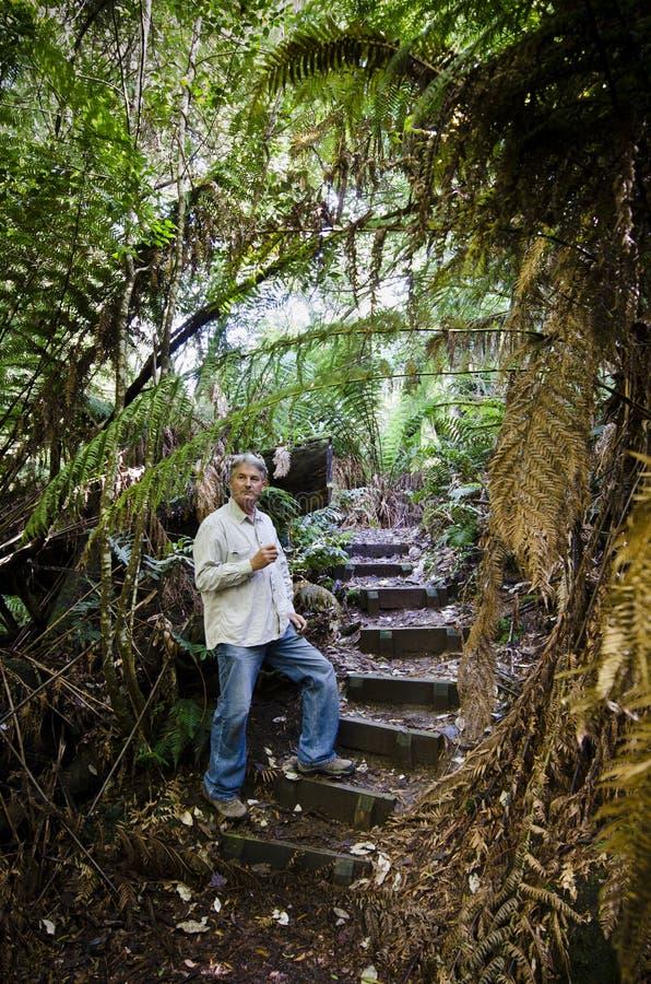 Homem quadro por ferns, floresta húmida tasmaniana imagens de stock royalty free