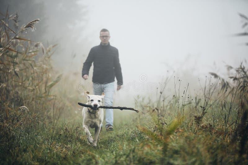Homem que anda com o cão na névoa do outono fotografia de stock