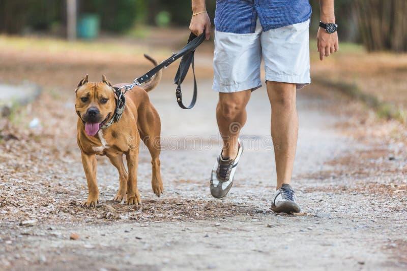 Homem que anda com seu cão no parque fotografia de stock