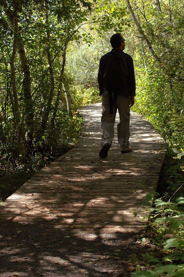 Homem que anda na floresta foto de stock
