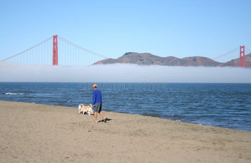 Homem que anda seu cão ao longo da praia fotografia de stock royalty free