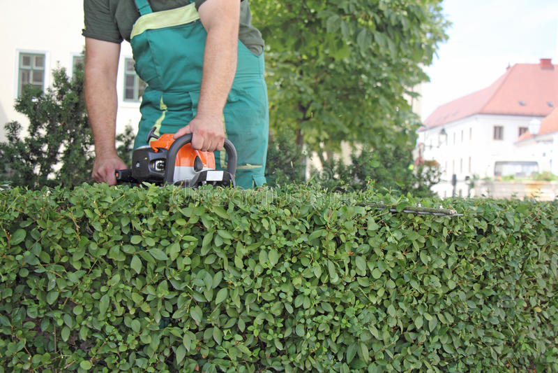 Homem que apara hedge_2 fotos de stock royalty free