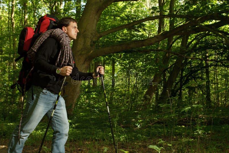 Homem que caminha com a área florestado imagens de stock
