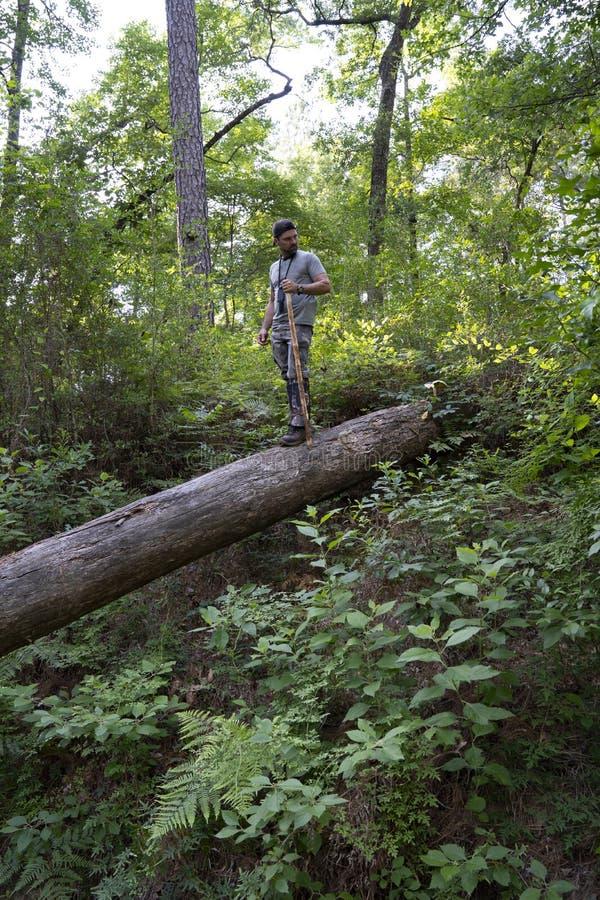 Homem que caminha na floresta da nação foto de stock royalty free