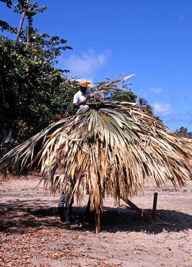 Homem que cobre com sapê um parasol, Tobago imagem de stock
