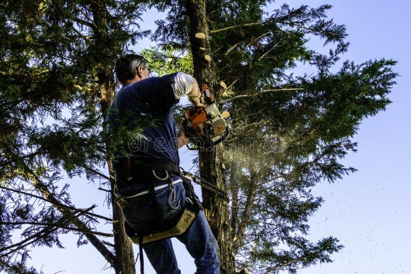 Homem que corta ramos com serra de cadeia imagem de stock