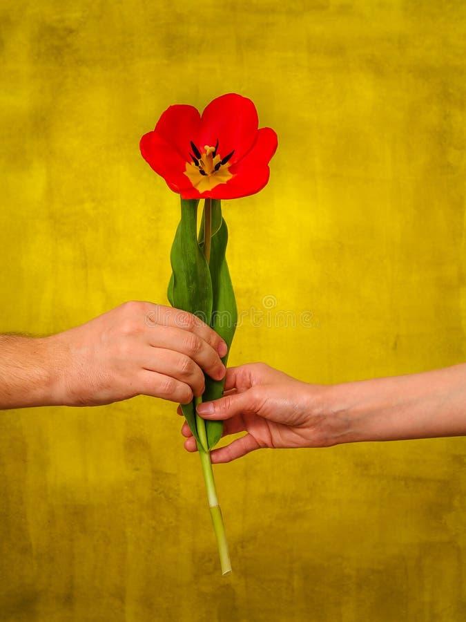 homem que dá flores à mulher fotografia de stock