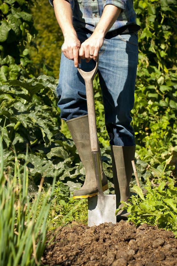 Homem que escava no jardim vegetal fotos de stock royalty free