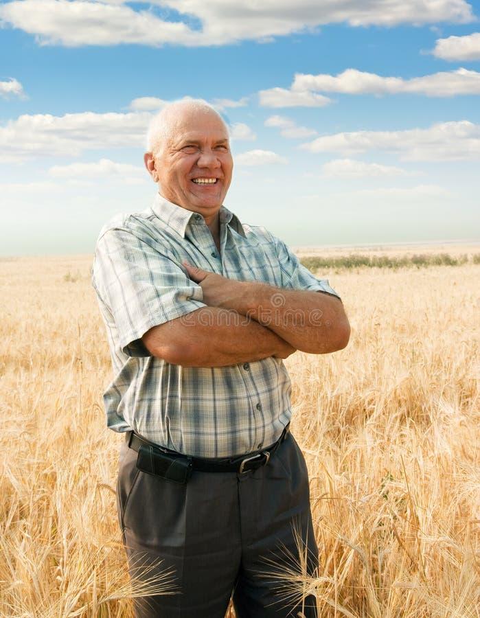 Homem que está no campo de trigo fotos de stock royalty free