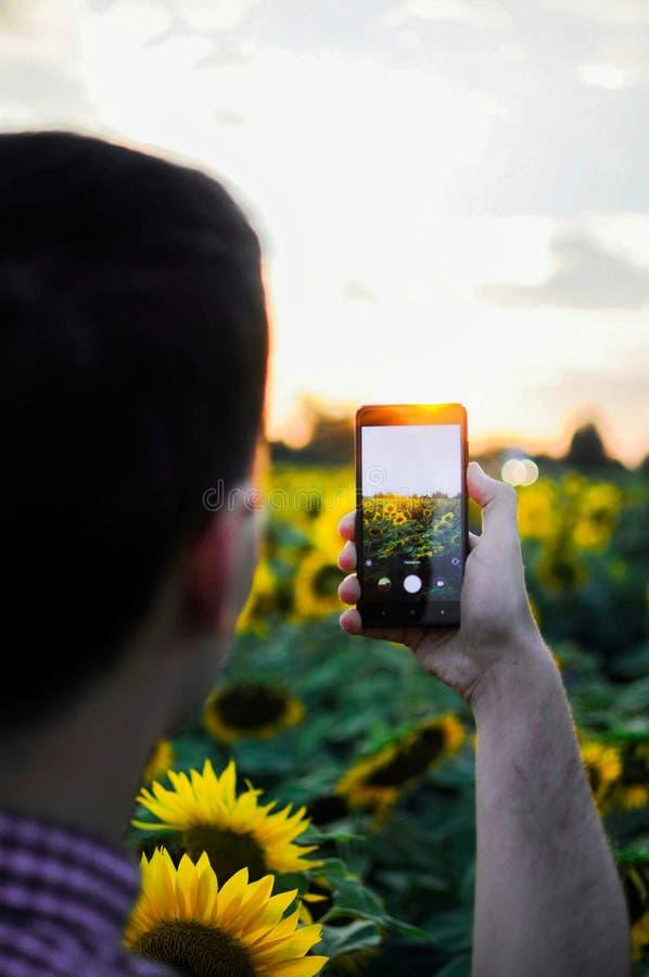Homem que faz a foto pelo telefone celular O menino faz a foto com girassóis fotografia de stock