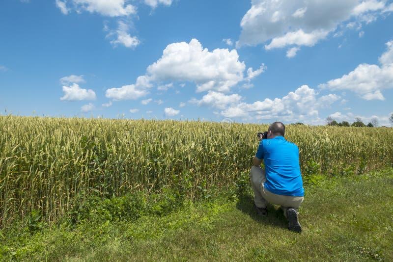 Homem que fotografa um campo de trigo fotos de stock royalty free