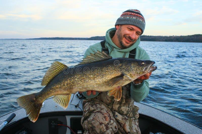 Homem que guarda o pescador dos peixes da pesca dos Walleye foto de stock royalty free