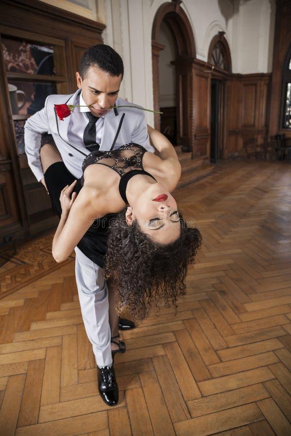 Homem que guarda o tango de Rose In Mouth While Performing com sócio fotografia de stock