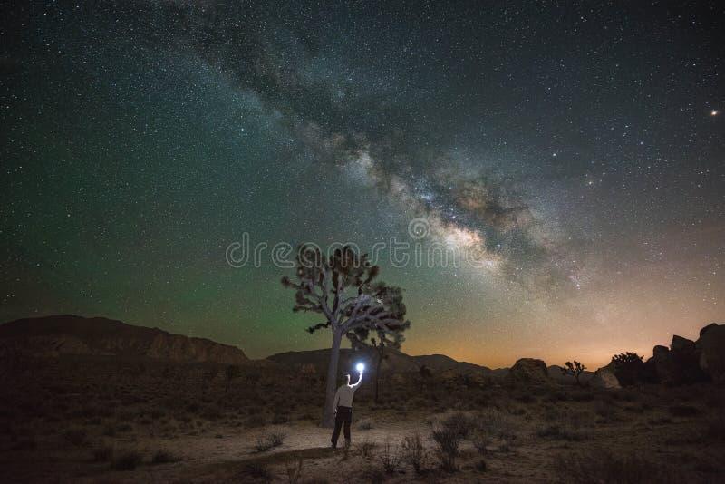 Homem que ilumina Joshua Tree na noite fotos de stock royalty free