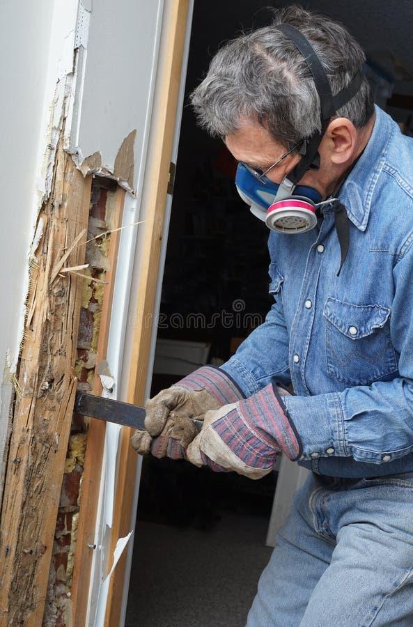 Homem que remove a madeira danificada térmita da parede imagens de stock
