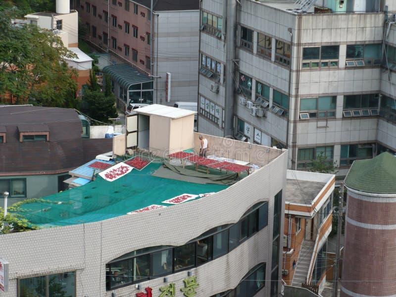 Homem que seca Chili Peppers no telhado de uma construção em Coreia do Sul imagens de stock royalty free